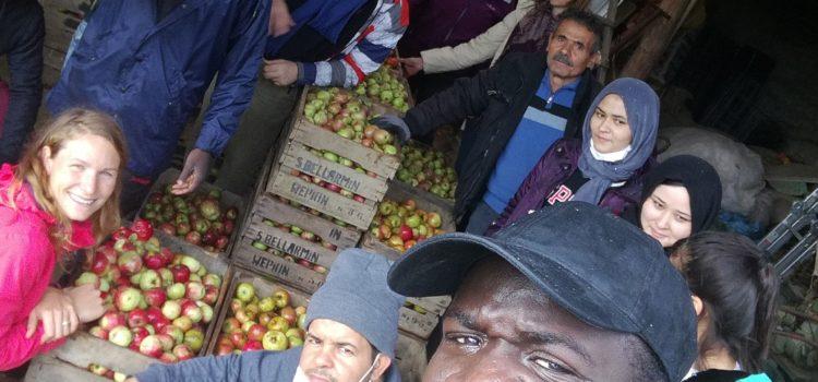 Récoltes collectives, ateliers presse et fête de la Pomme !